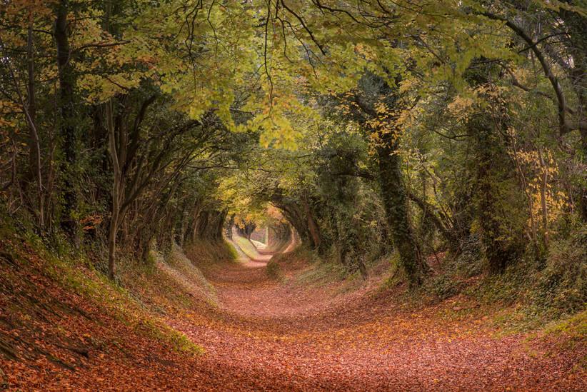 Bosque del Sur de Inglaterra