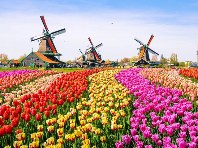 Luna de miel en Holanda: 7 sorpresas para enamorados