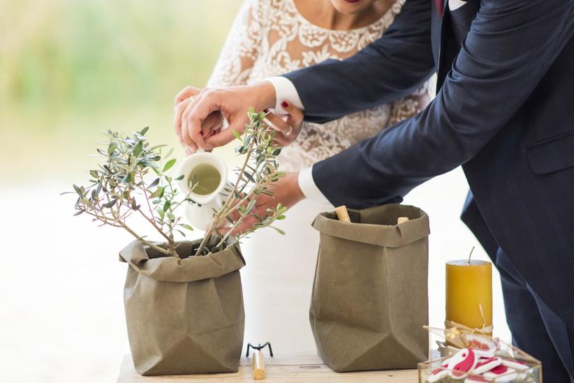 Ceremonia simbólica de la plantación durante la boda civil