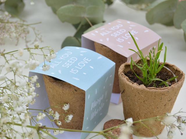 Regalos de boda por poco dinero: propuestas para plantar