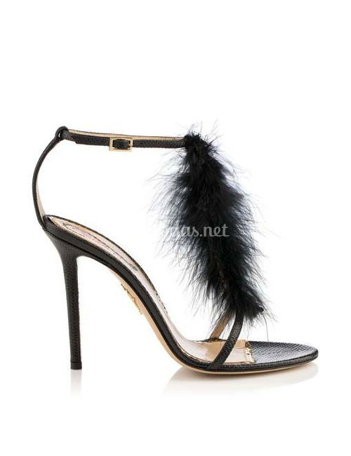 PROVOCATEUR, Charlotte Olympia