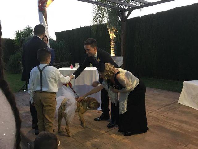 La boda de David y Amanda en Elx/elche, Alicante 13