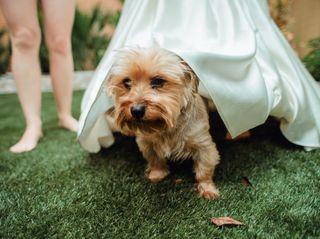 La boda de Iryna y Julio 3