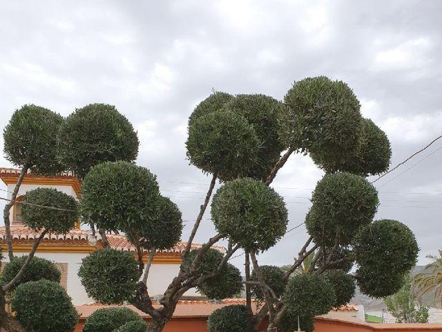 La boda de Julio  y Raquel en Granada, Granada 7