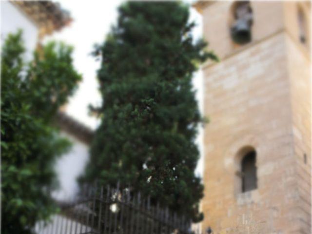 La boda de Alberto y Fuensanta en La Zubia, Granada 15