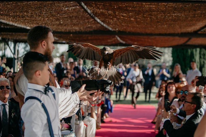 Águila y Búho en la ceremonia