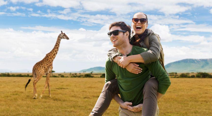 Kenia, safari