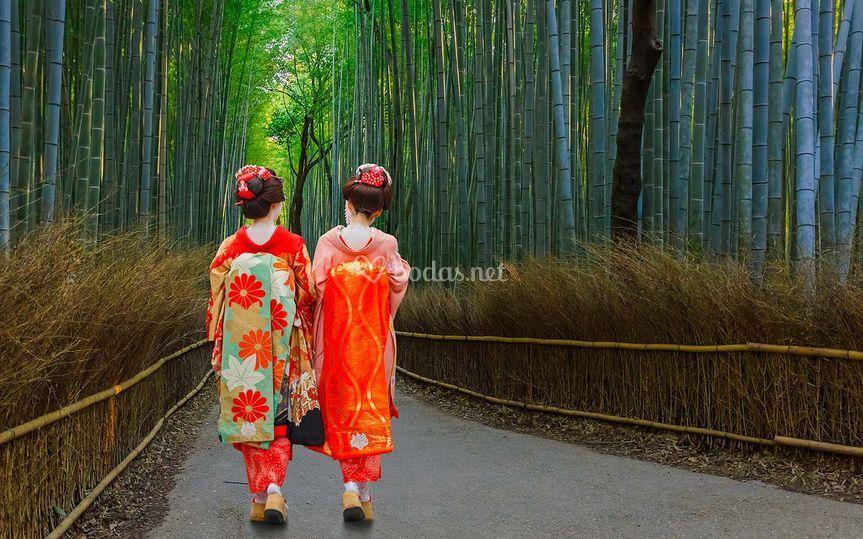 Bosque de Bambú - Kyoto