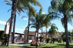 Palmeras y plantas tropicales de San Patricio