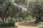El bosque de Finca Montealegre