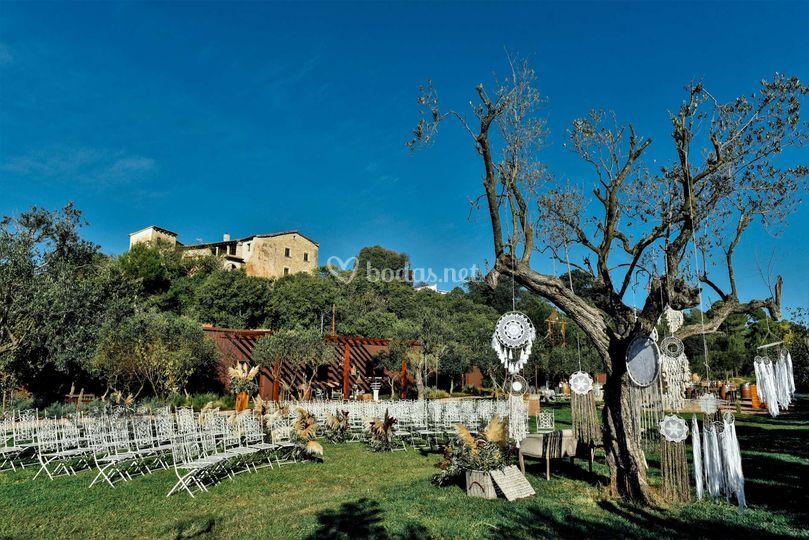 Cerimonia a l'olivera