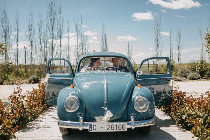 Escarabajo de boda