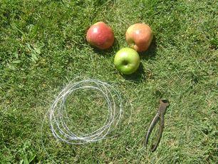 Guirnalda de manzanas