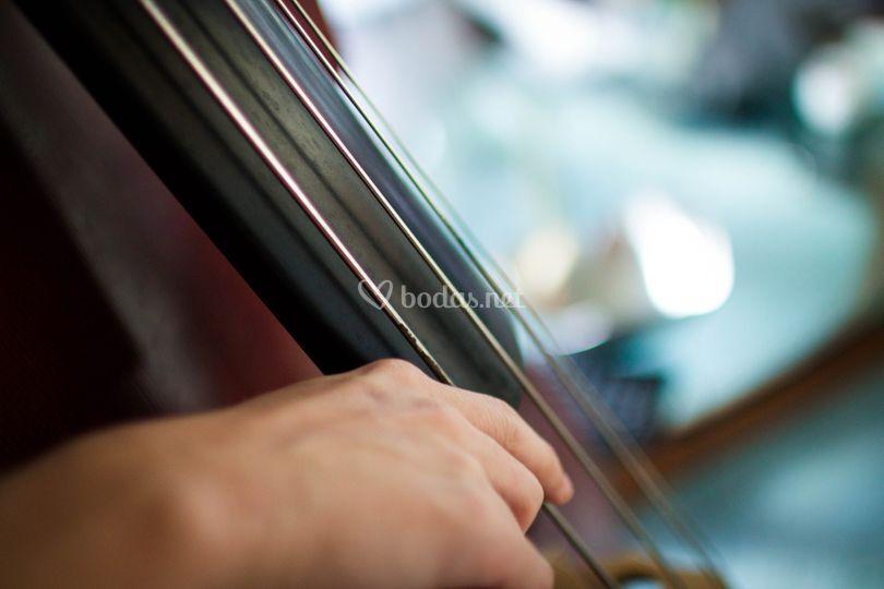 Instrumentistas