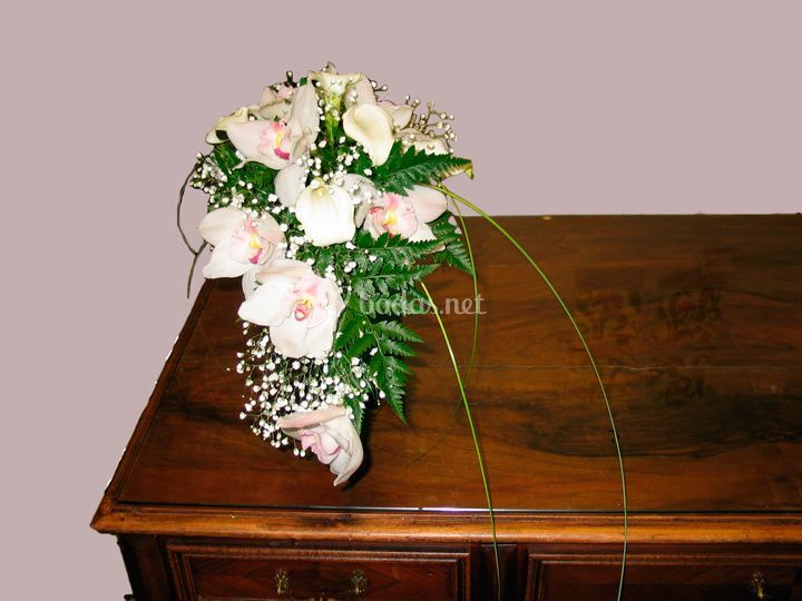 Harmonia Floral