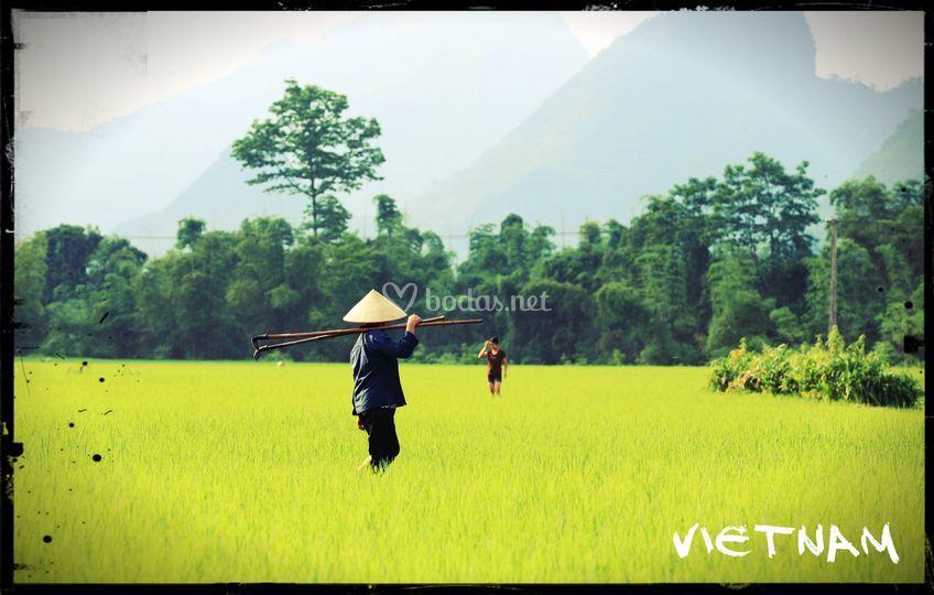 Arrozal Vietnam