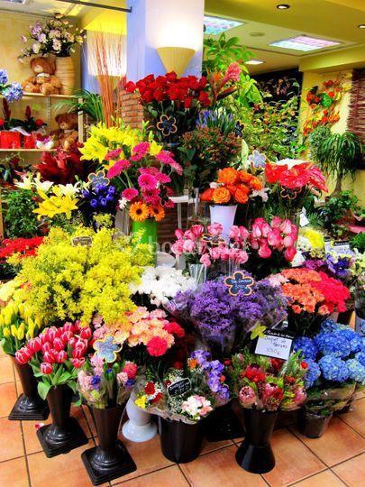 Exposición de flor