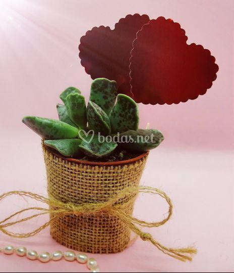Vasitos con planta para invitados