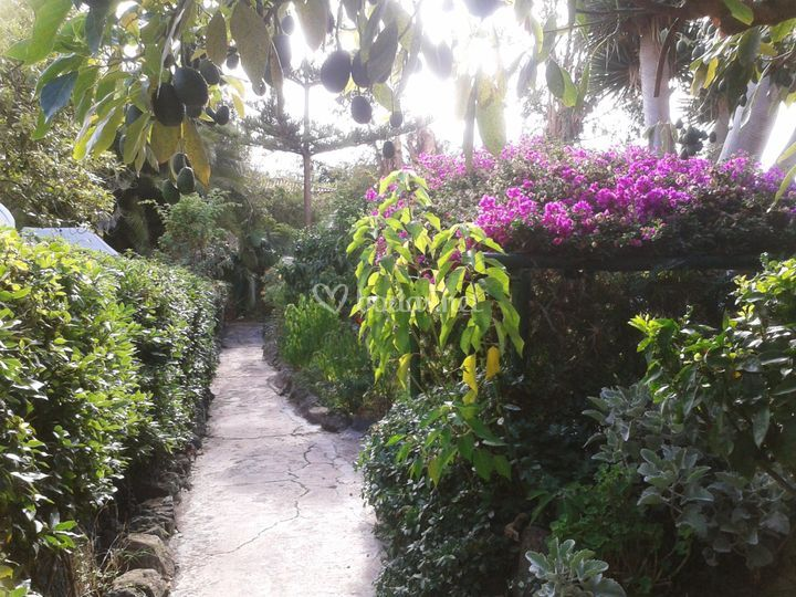 Laterales jardines