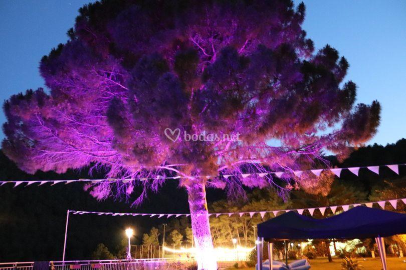 Iluminación de árbol de colores