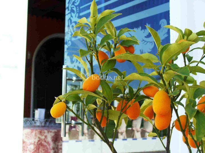 Detalle naranjos en jardín