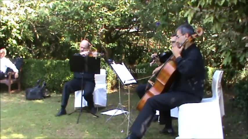 Música en cóctel