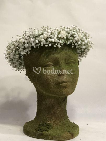 Coronita de paniculata