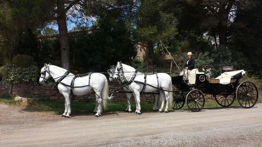 Pujol Cavalls