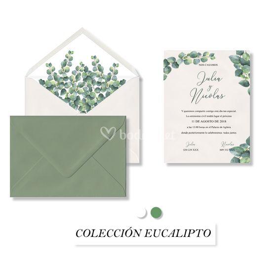 Colección eucalipto