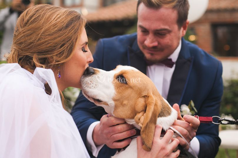Leodavinci Weddings