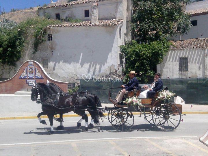 Un transporte único