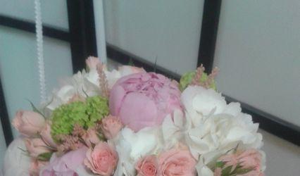 Nerine Arte Floral