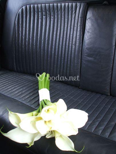 Daimler asiento trasero