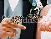 Suelta mixta de mariposas