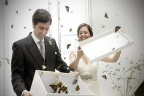 Mariposas en tu Evento