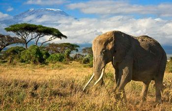 Consejos para una luna de miel de safari