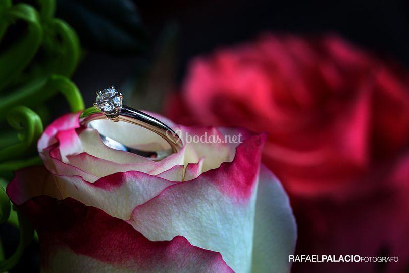 Comprometidos