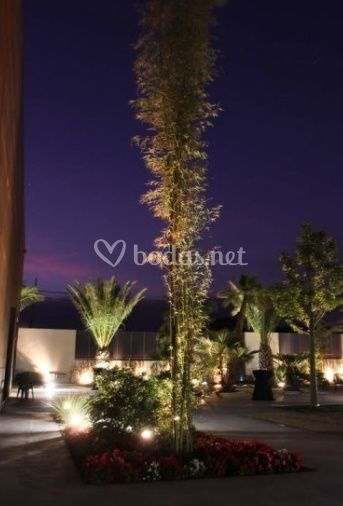 Quinta lacy for Iluminacion para palmeras