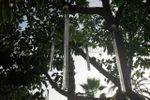 Decoración en los árboles