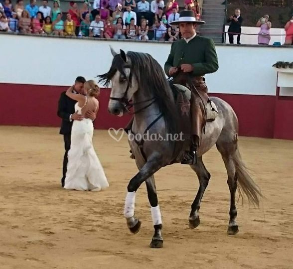La novia bailó con el caballo