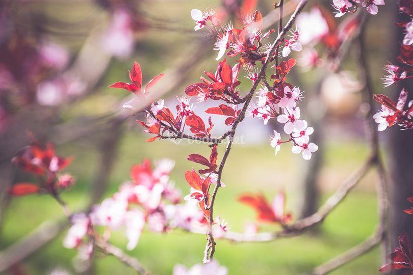 Frutales en flor