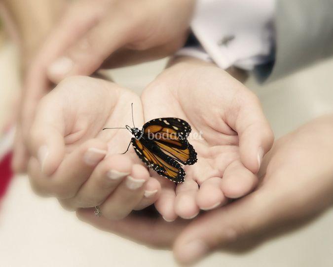 Ceremonia, mariposas