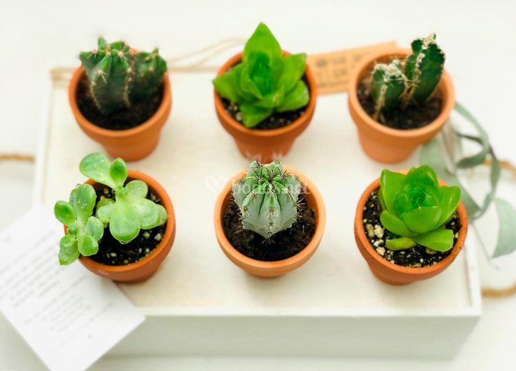Mini plantitas variadas