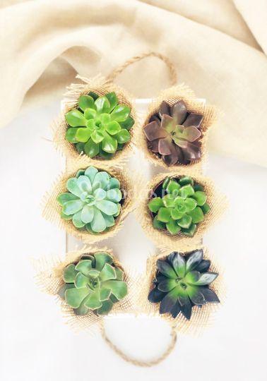 Mini plantitas variadas de yute