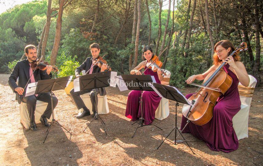 Cuarteto Mots de fusta 2018