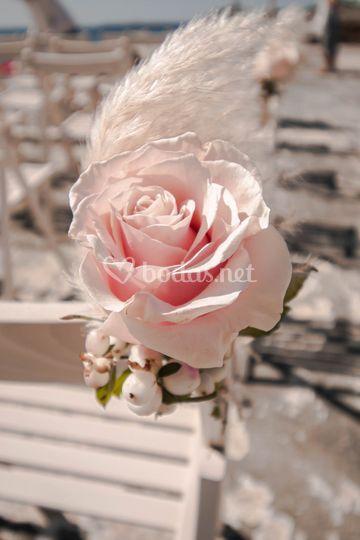Algar rosa