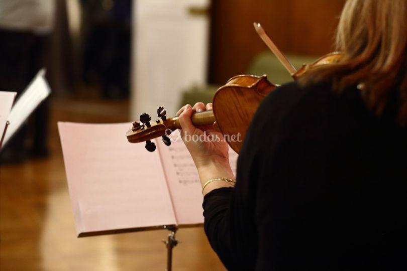 Sotto Voce, violinista