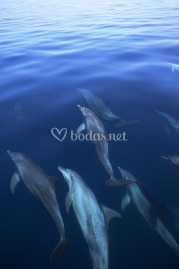 Delfines Maldivas