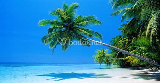 Paraiso en el Caribe