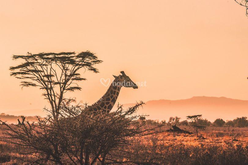 Viajes por África
